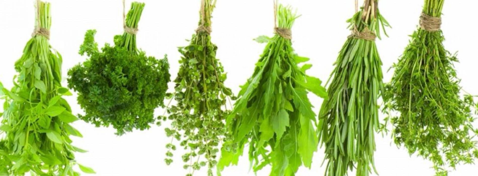 10 geneesmiddelen uit je kruidentuin