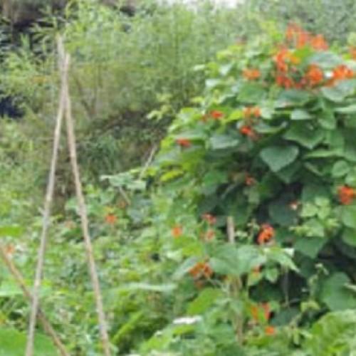 Maak je los van de industriële voedselproductie door permacultuur tuinieren