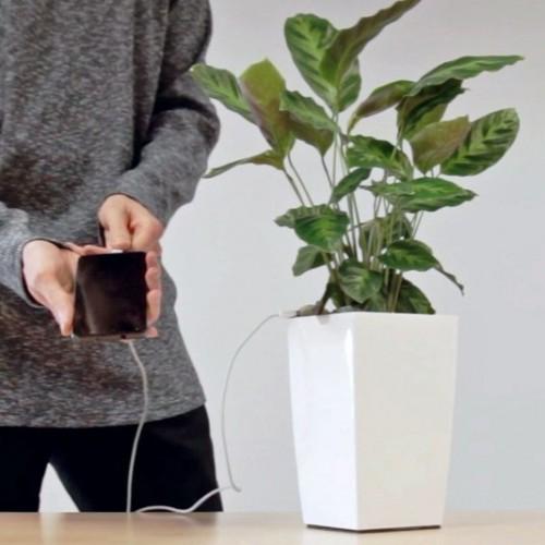 Laad je telefoon op met een plantje