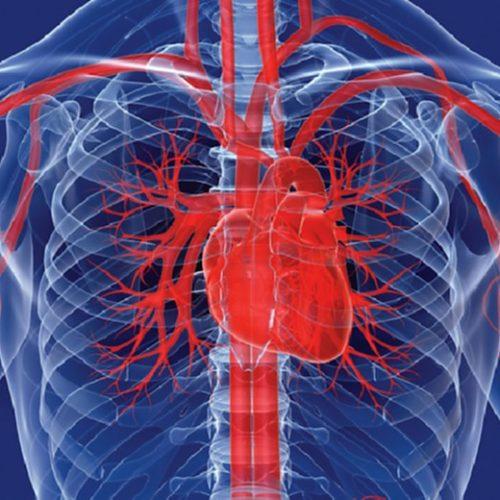 Iedereen heeft een gezond en sterk hart nodig. Dit zijn 10 manieren om je hart gezond te houden.!