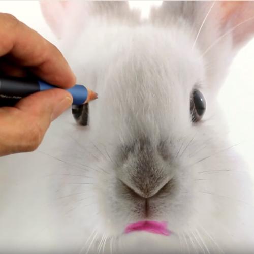 SHOCKING: 3 producten waarvan je niet kan geloven dat ze op dieren zijn getest!
