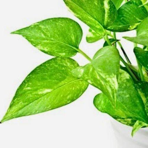 20 Kamerplanten die giftige stoffen uit uw huis halen!