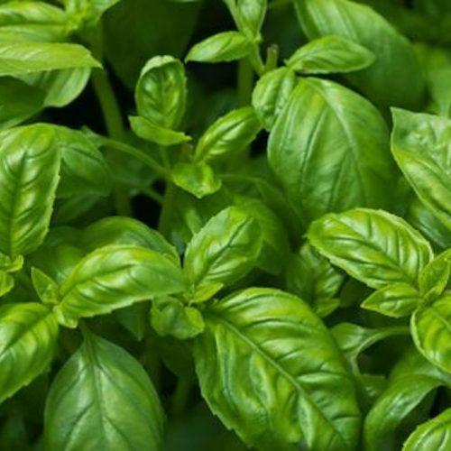 10 natuurlijke geneesmiddelen voor een gezonde huid!