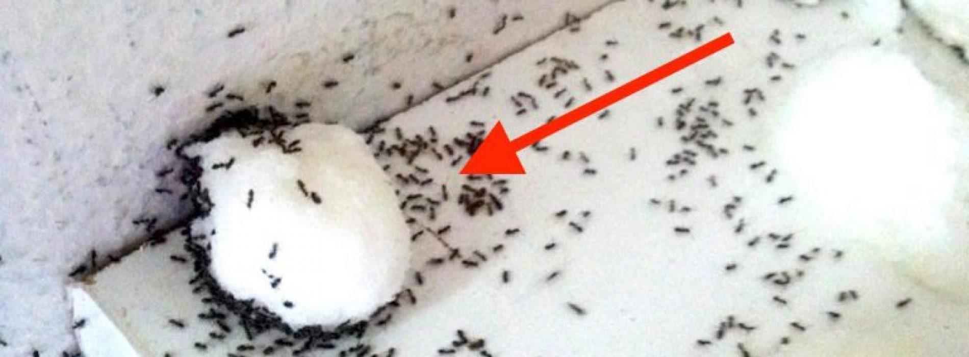 Mieren overlast? Met dit handig recept kom je die vervelende mieren af!