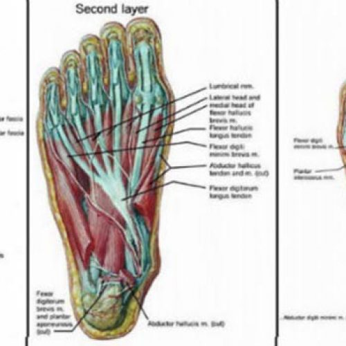 Het geheim van het verlichten van rugpijn zit in je voeten! Doe deze 5 Oefeningen voor slechts 15 minuten