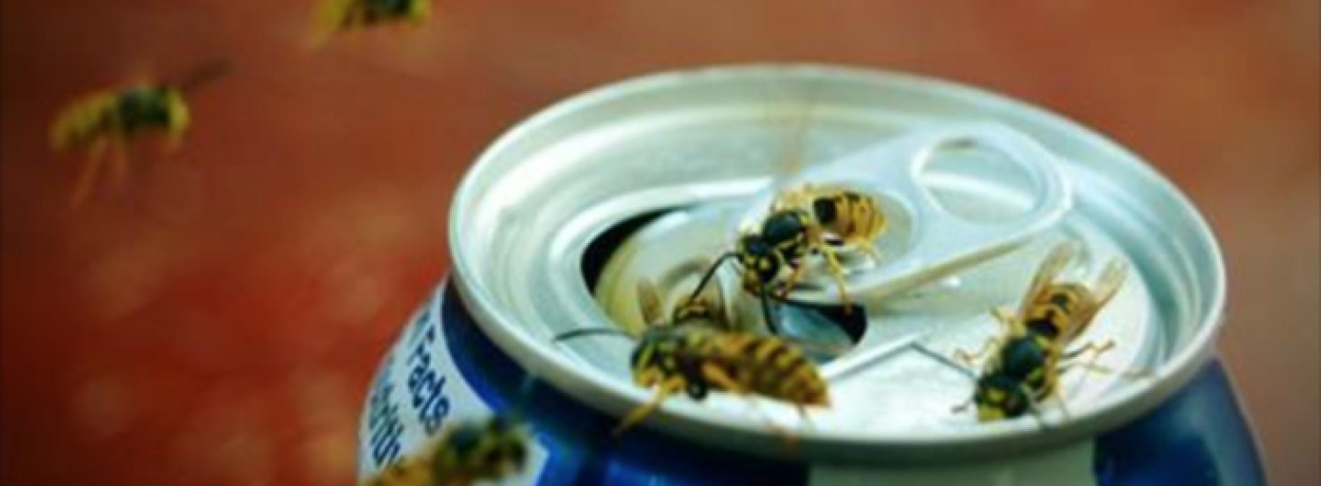 Reken voorgoed af met wespen met deze 5 geweldige tips!