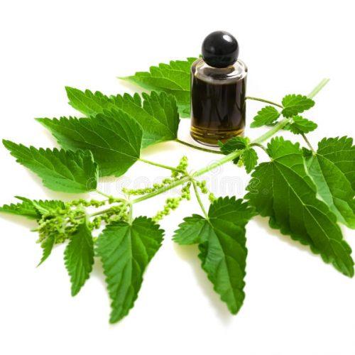 """""""De plant van de eeuwige jeugd"""" Deze plant voedt, geneest en regenereert je cellen; bestrijding van bloedarmoede, diabetes, jicht, artritis, artrose, reuma, bescherm uw lever en meer"""