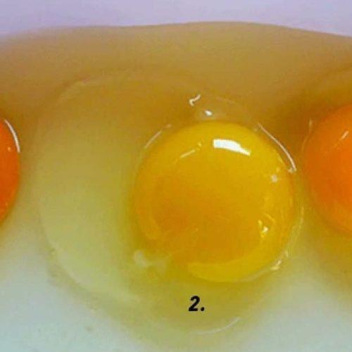 Wat eierdooier kleur kan onthullen over de kip waar hij vandaan kwam