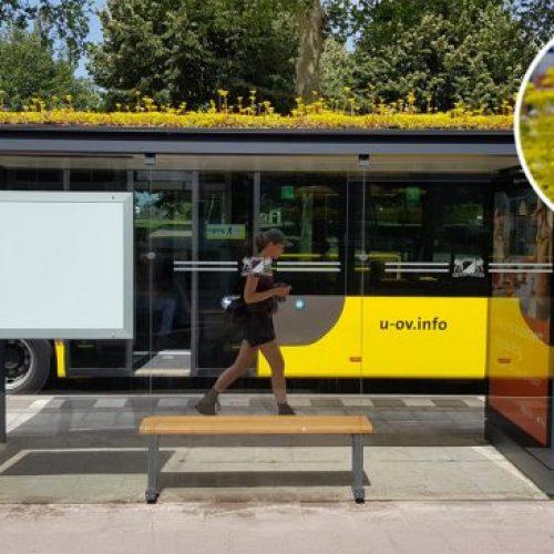Deze Nederlandse stad heeft haar bushaltes omgezet in bij haltes!