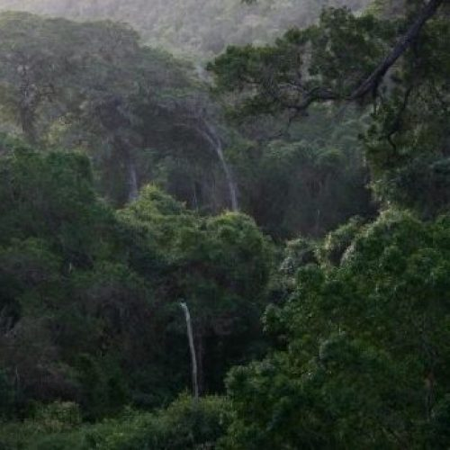 Ethiopië plantte 350 miljoen bomen in één dag en breekt daarmee het wereldrecord