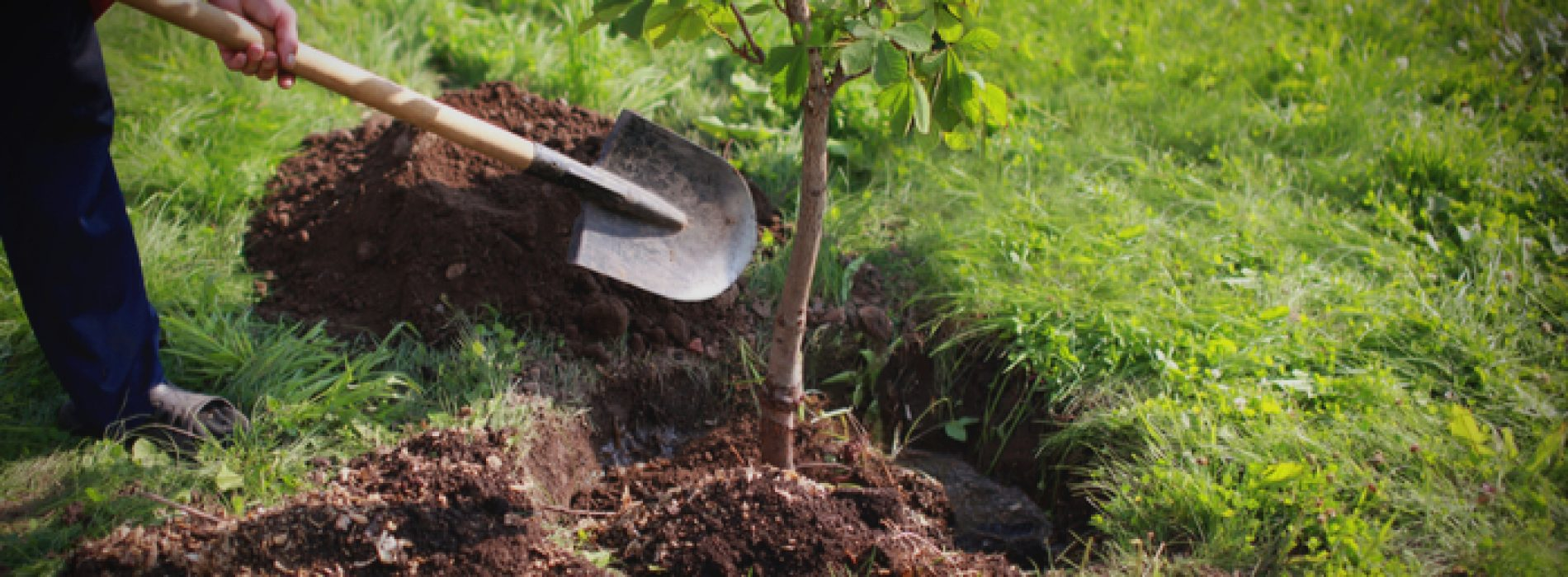 Zo moet het: Nieuw-Zeeland plant 1 miljard bomen om klimaatverandering te bestrijden