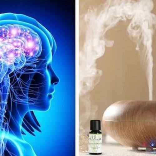 Wat gebeurt er met de hersenen als je essentiële oliën verspreidt