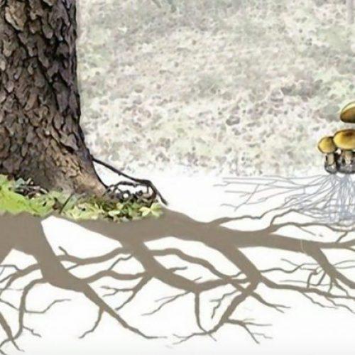 Bomen communiceren in een taal die we kunnen leren, beweert ecoloog