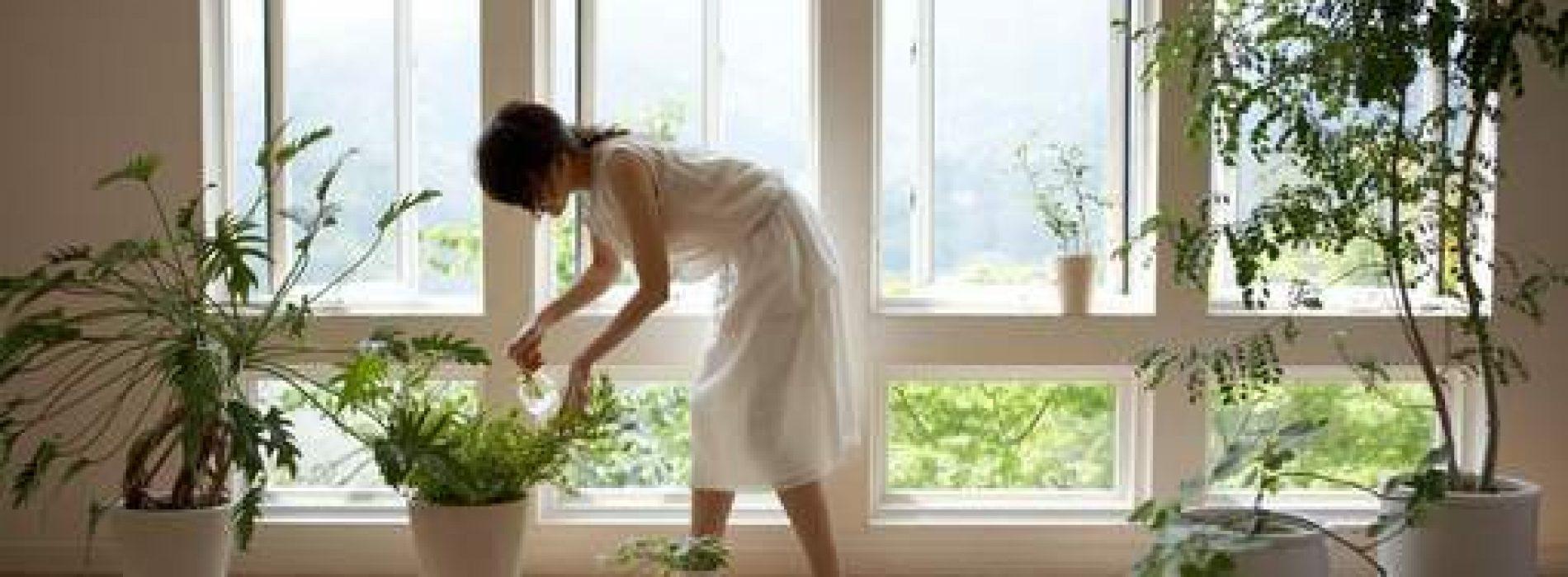 Vijf mooie planten die de lucht in huis zuiveren