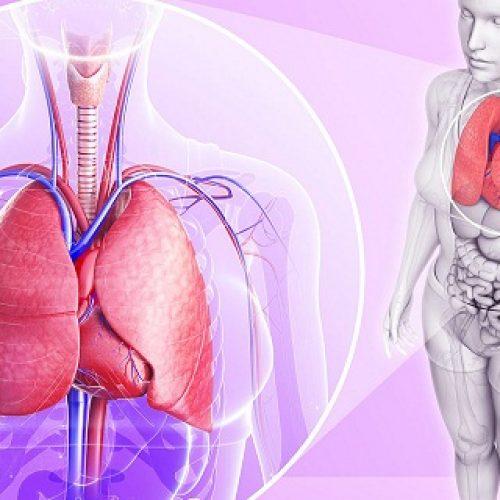 Wetenschappers zijn unaniem: deze 4 ingrediënten zullen je longen reinigen!
