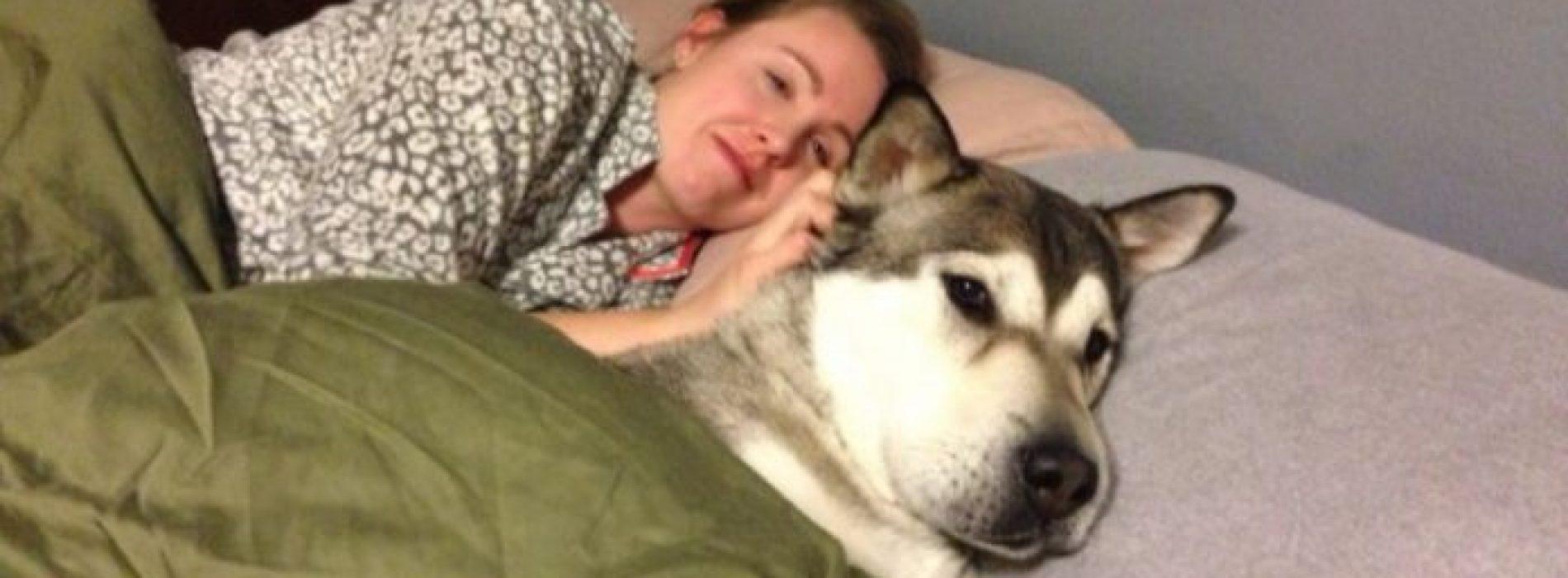 Honden horen niet in bed thuis?! Na het lezen van dit artikel, zal je blij zijn dat je altijd je hond bij je hebt