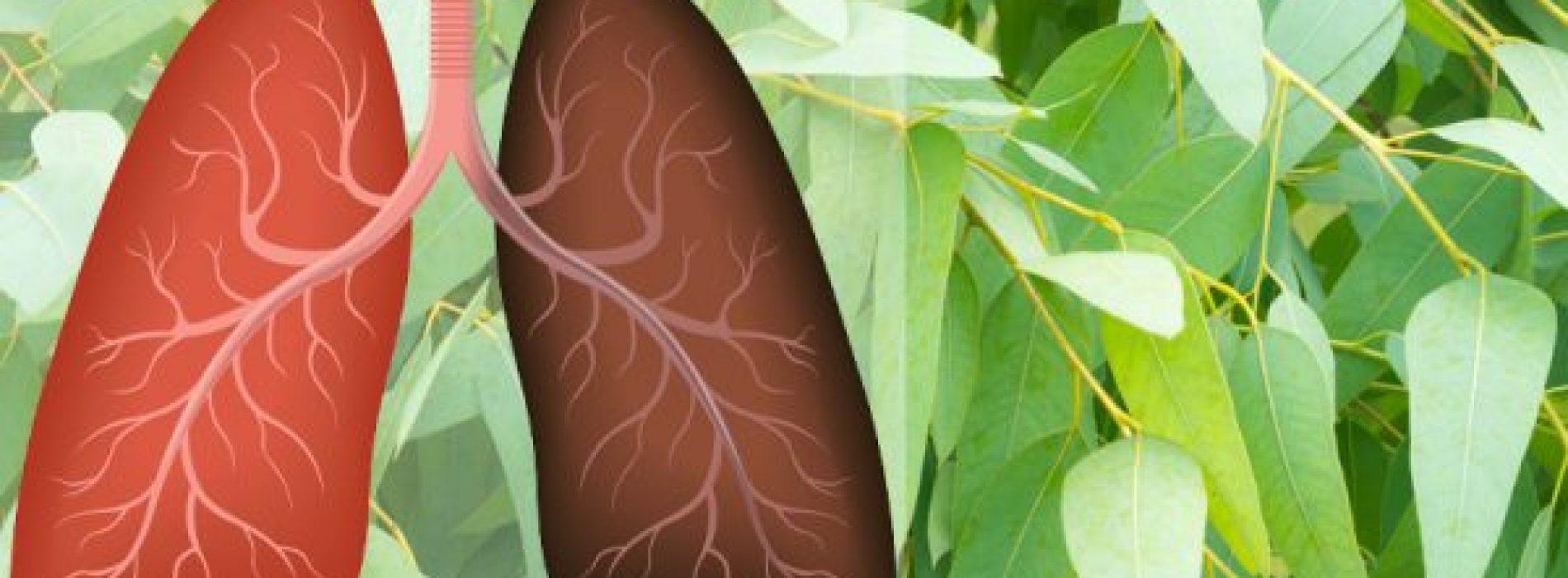 9 planten en kruiden die longschade herstellen, infecties bestrijden en de gezondheid van de longen bevorderen