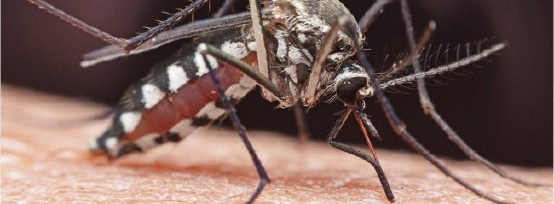 Florida Health Officials zeggen Via muggen overgedragen virus dat zwelling van de hersenen veroorzaakt, gedetecteerd in de staat
