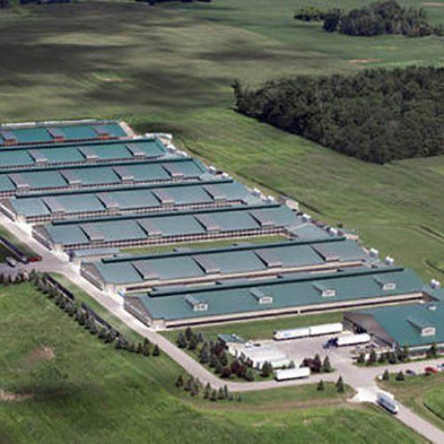 """Meer dan een miljoen kippen gepropt in donkere magazijnen met 3 per vierkante meter telt als """"USDA Organisch"""""""