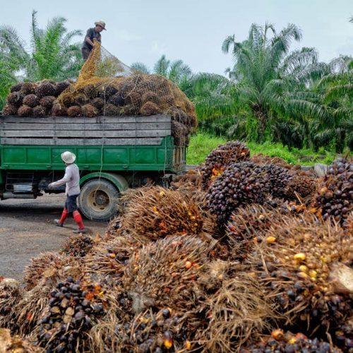 Kent u alle verborgen namen van palmolie?