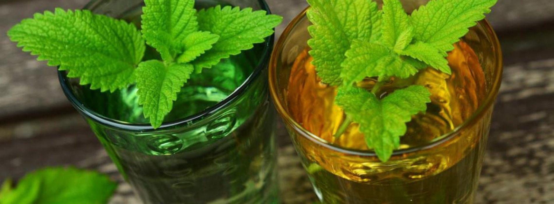 Citroenmelisse Kruid is nuttig voor het verlichten van moeilijk te behandelen pijn, van gordelroos tot menstruatiepijn en meer