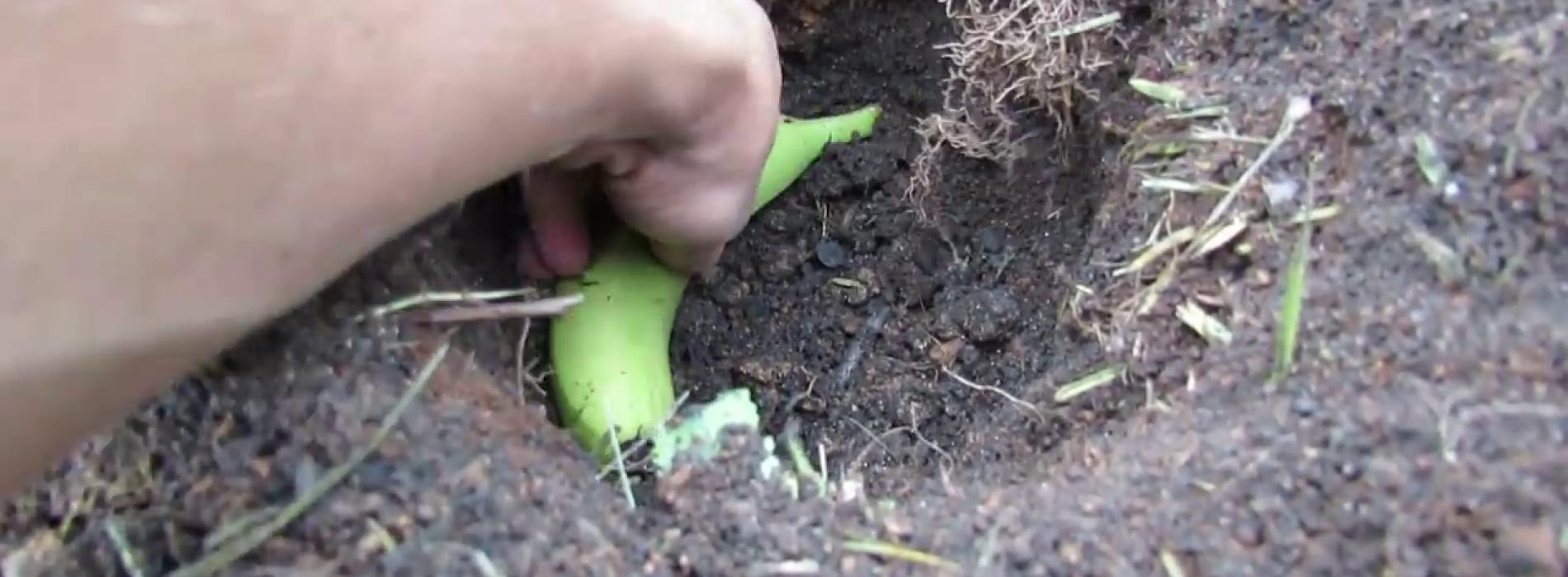 Als je een ei en een banaan naast elkaar in de tuin begraaft, krijg je een aantal verbluffende resultaten