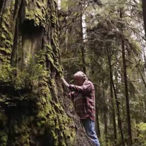 Goed bezig! Deze man kloont oude groei-sequoia's en plant ze op veilige plekken (video)