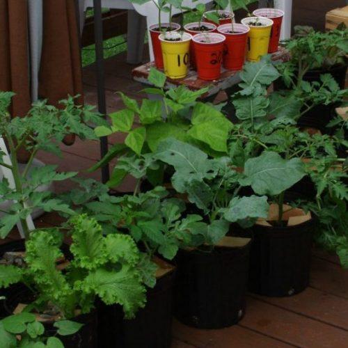 15 groenten perfect voor containertuinieren
