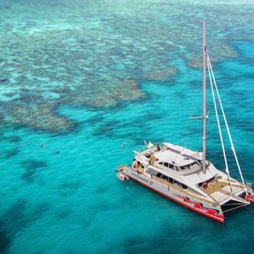 Zonder toeristen plant Australian Scuba Tours in plaats daarvan koraal