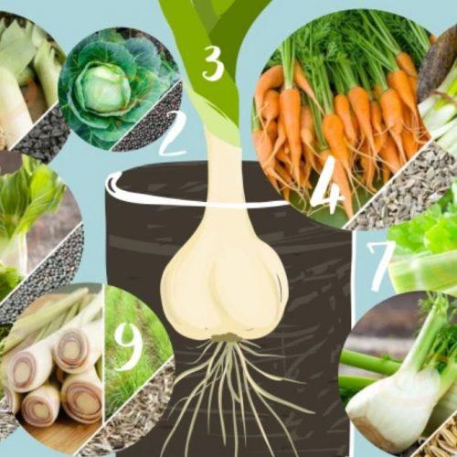 Paraatheid: hoe groenten in water te laten groeien