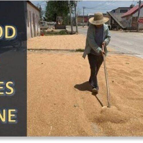 Adapt 2030 Ice Age Report: Voedsel, rijkdom en bijen verdwenen